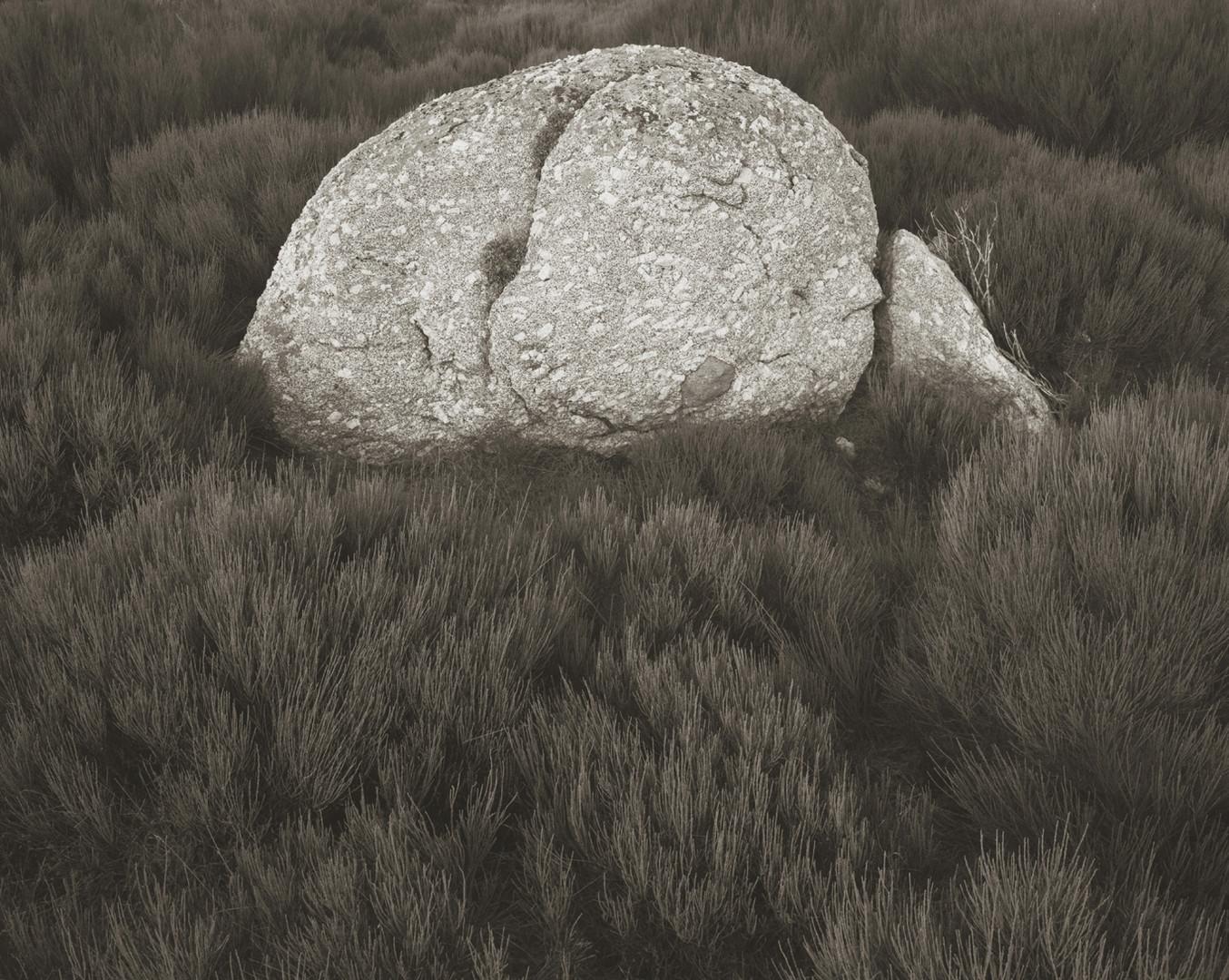 rock on gonet