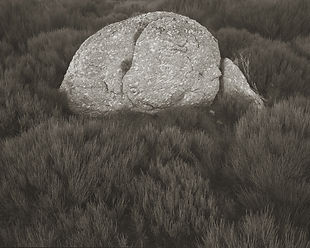 rock on gonet.jpg