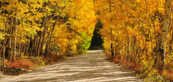 Tunnel of Gold