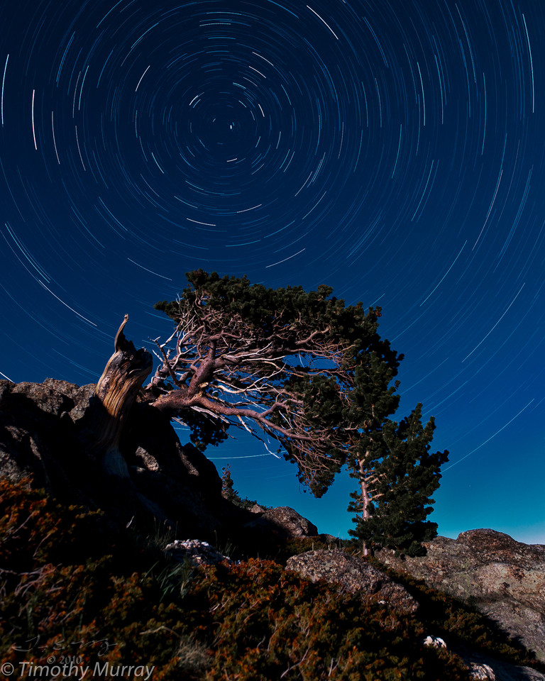 Bristlecone Star Trails