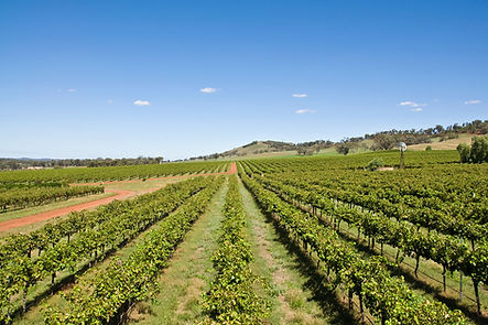 valleys largest wine producers.jpg
