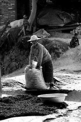 Photographie travailleuse du thé à Hsipaw en Birmanie 2015