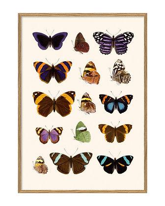 Affiche papillons vintage - Déco curiosités | Trois Fenêtres