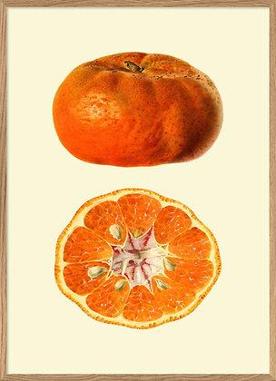 Affiche de fruit Mandarine - Poster vintage pour deco cuisine - Marseille