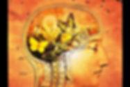 lightbox marseille - Cabinet de curiosités Anatomie