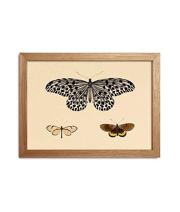 Petit cadre de papillons | Cabinet curiosités Marseille