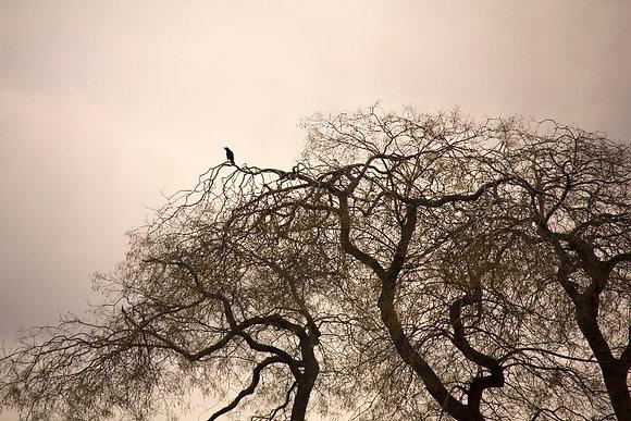 Photographie Nature Oiseau sur la cime ©Aida Rojas