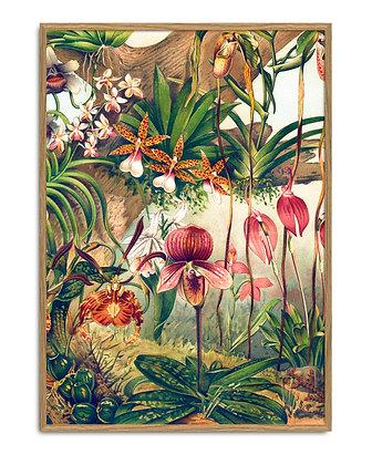 Affiche Orchidée dans un univers sauvage - Illustration vintage | Marseille