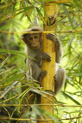 Photographie singe en Inde - 2010