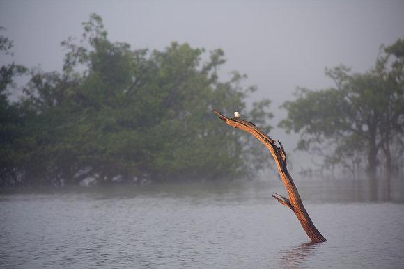 Photographie Amazonie - 2011