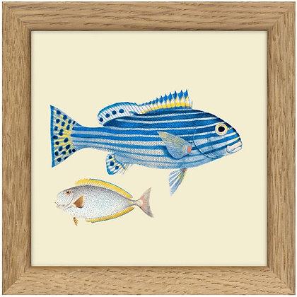 Poisson bleu tropical - artprint Dybdhal - Affiche vintage - Marseille