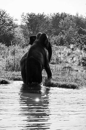 Éléphant - Udawalawe - Sri Lanka - 2016 © Aida Rojas