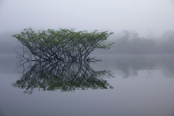 Photographie Mangrove Bresil - Trois Fenêtres
