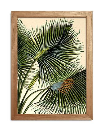 Image vintage feuille de palmier paon - Cadre illustration ancienne - Marseille