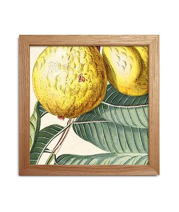Cadre dessin vintage de citrons - Déco murale | Trois Fenêtres