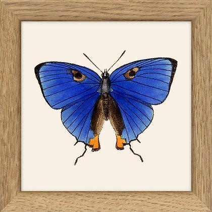 Affiche papillons bleu aux yeux de chat - Cadre vintage - Marseille