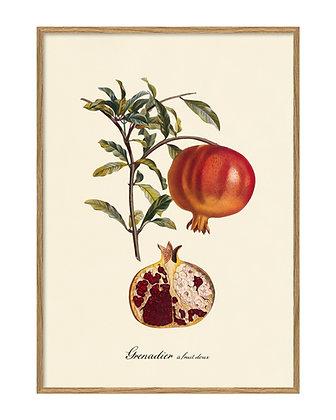 Affiche vintage fruits rouges - Grenadier - Poster déco cuisine - Marseille