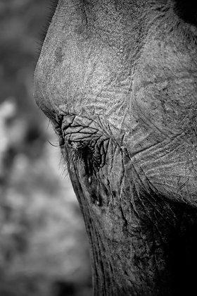 Photographie Éléphant du parc Udawalawe au Sri Lanka - 2016 ©Aida Rojas