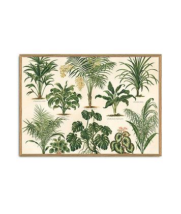 Affiche vintage Plantes tropicales - Dybdhal | Trois Fenêtres