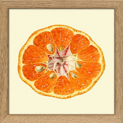 Image mandarine découpée pour deco de cuisine - Déco murale - Marseille