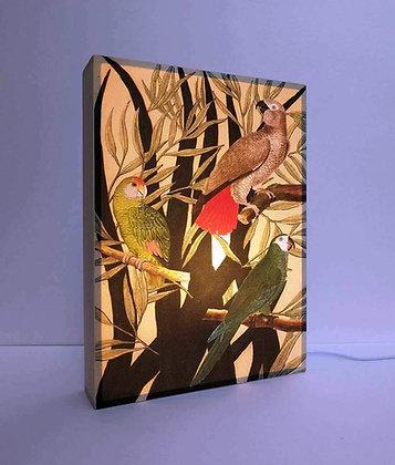 Boite lumineuse - Tableau de Perroquets et Perruches dans un univers tropical