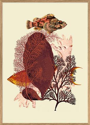 Affiche vintage Poissons et corail | Trois Fenêtres