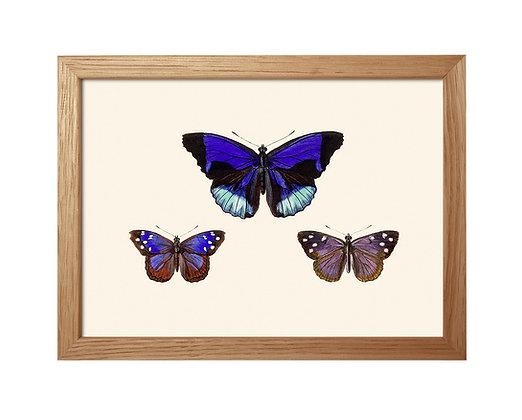 Image vintage de papillons bleus | Trois Fenêtres à Marseille