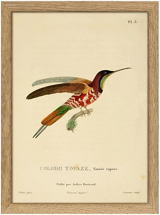 Colibri Topaze - Affiche vintage Dybdahl encadrée -  Marseille Achat en ligne
