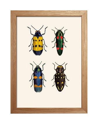 Illustration Insectes pour cabinet de curiosités   Trois Fenêtres