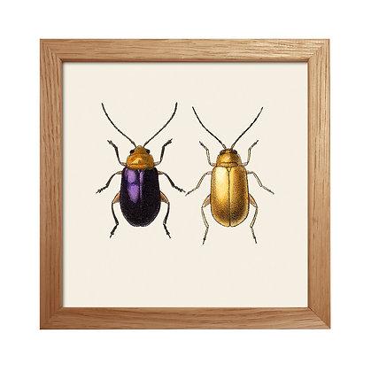 Scarabée dorée - La belle paire - Affiche vintage Dybdhal | Trois Fenêtres