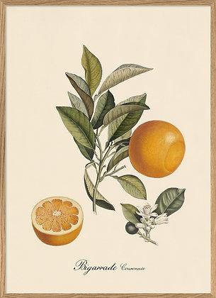 Bigarrade - Affiche vintage orange - Poster agrumes Marseille
