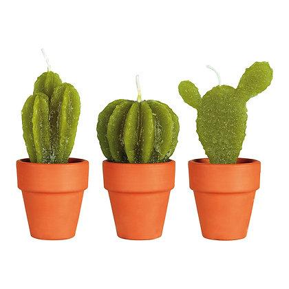Petites bougies cactus parfumées - Pack de 3