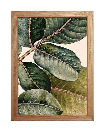 Image déco tropicale - Caoutchouc aux nuances de vert   Trois Fenêtres