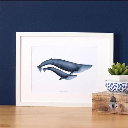 Affiche baleines bleues - Marseille