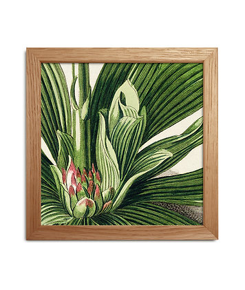 Cadre dessin vintage de plante tropicale - Pink touch | Trois Fenêtres