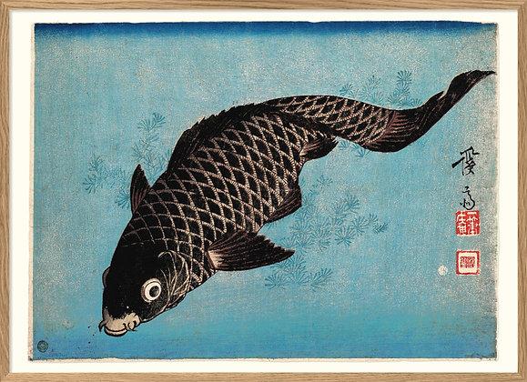 Affiche japonaise vintage poissons - Carpe Koi fish - Marseille