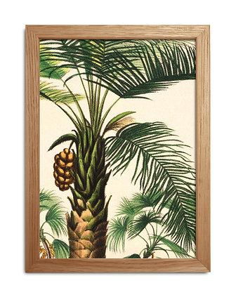 Image vintage encadrée d'un palmier en fruit - Palm tree | Trois Fenêtres
