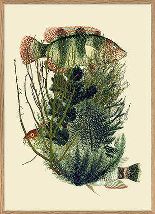 Affiche vintage Poissons et algues marines | Trois Fenêtres