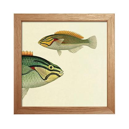Vieille image Tiger fish - Cabinet curiosités - Dybdhal chez Trois Fenêtres à Marseille