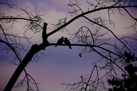 Photographie love birds - tourterelles - 2013