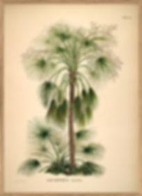 Affiche vintage Marseille - Affiche tropicale Palmier - Dybdhal