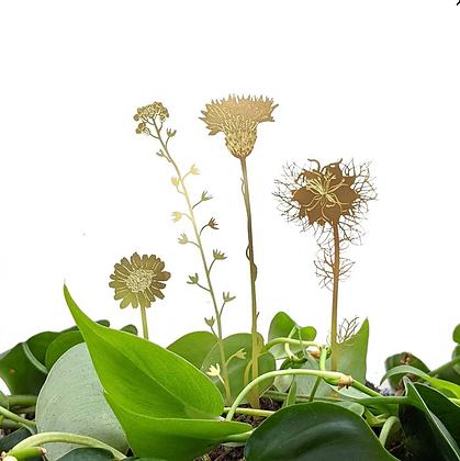 Fleurs sauvages - Décoration plantes   Trois Fenêtres