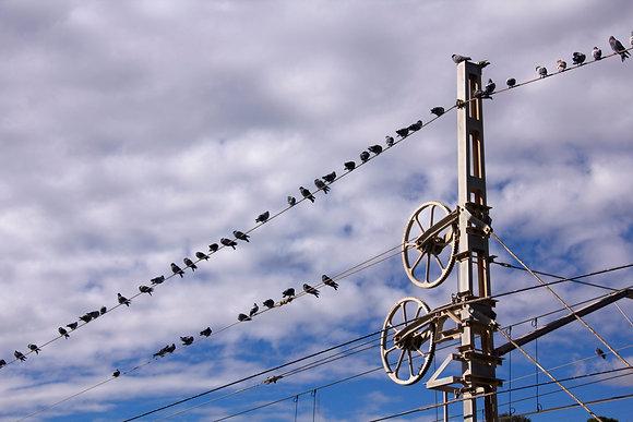 Photographie oiseaux sur le fil - Trois Fenêtres