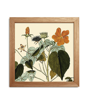 Cadre illustration botanique Fleur orange - Flower power   Trois Fenêtres