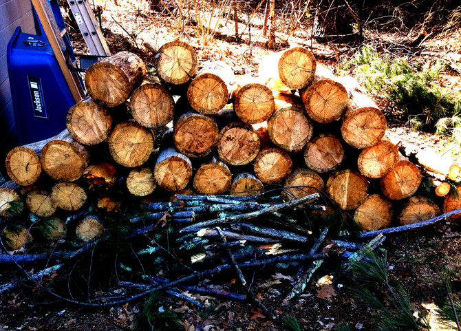 Squatting in the Woodpile