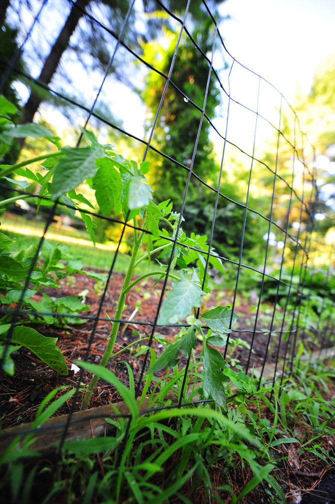 Good fences make fed gardeners.