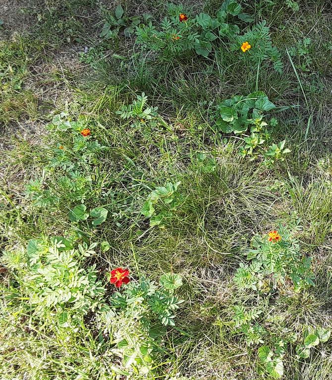 Migrant Flowers