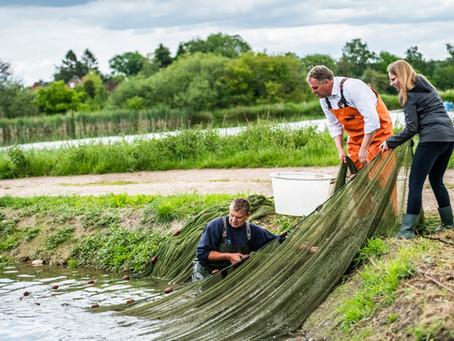 Vom Teich auf den Teller: nachhaltig, regional und frisch