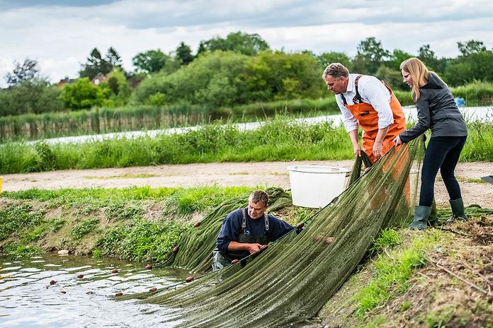 Transgourmet Ursprung Die Fischaktie