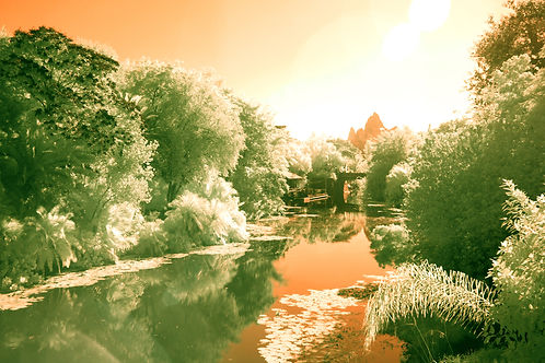 Paradise Infrared Photography Landscape at Disney's Animal Kingdom